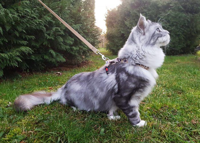 Macska szett